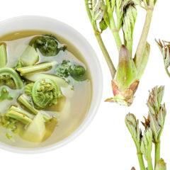 春のめざめの山菜スープ